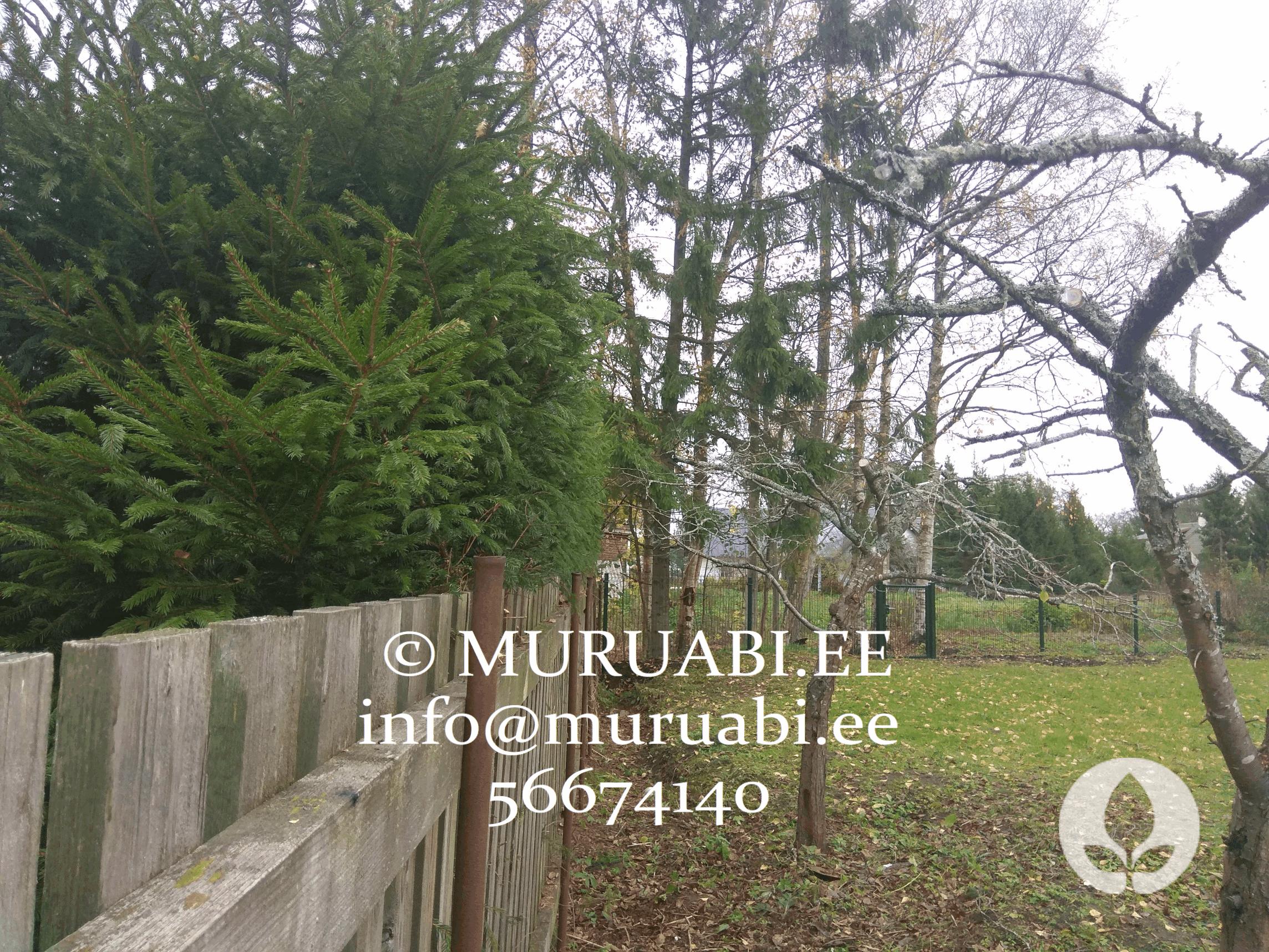 Hekkide piiramine, viljapuude lõikus. Kõik aiatööd Muruabilt!