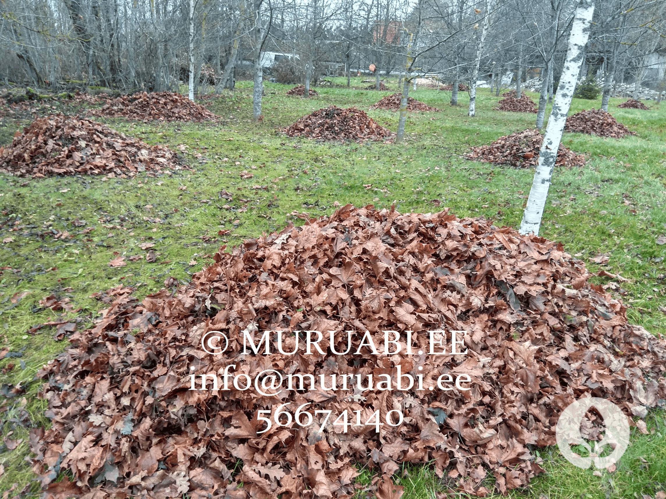 Lehtede riisumine, äravedu ja utiliseerimine. Kõik aiatööd Muruabilt!