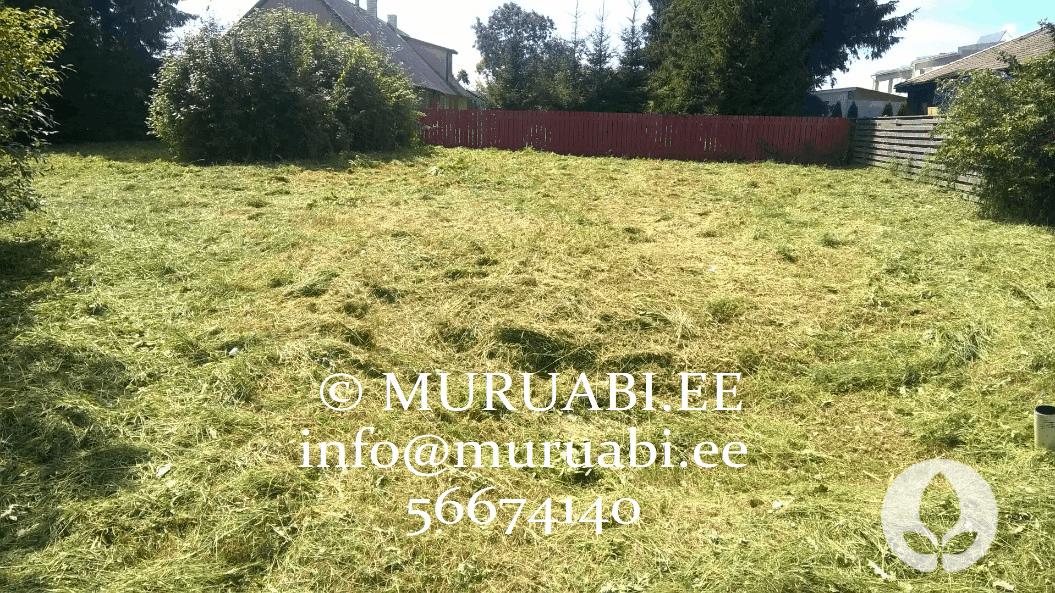 Muru niitmine ja trimmerdamine Tallinnas ja Harjumaal. Muruabi.