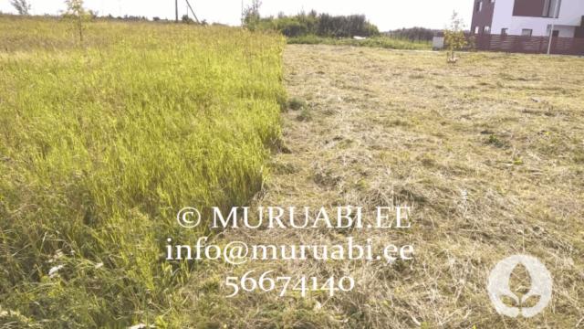 Muru trimmerdamine ja niitmine Tallinnas ning Harjumaal- Muruabi.